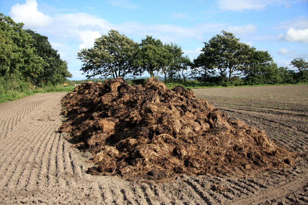 Pile_of_manure_on_a_field